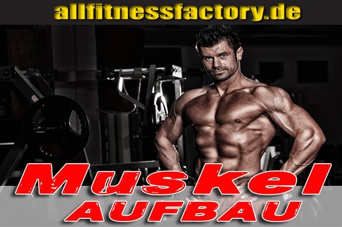 Muskelaufbau JETZT