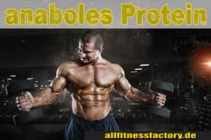 Protein-anaboles