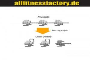 Cluster Dextrin vs Vitargo amylopectin