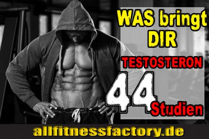 Was bringt Testosteron