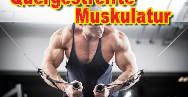 Quergestreifte Muskulatur